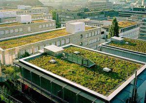 techo verde para el medio ambiente