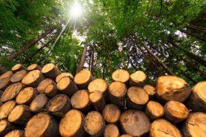 Usos de la energía de la biomasa