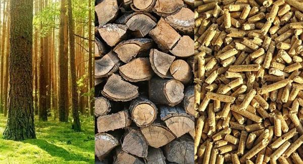 Biomasa es una fuente renovable
