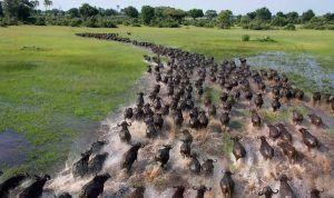 migracion de los animales por cambio climatico