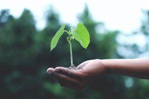 Que es la sostenibilidad
